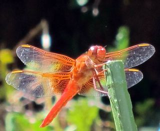 Dragonfly2011